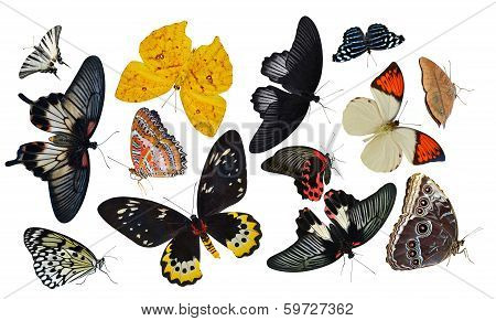 insect collection of butterflies isolated