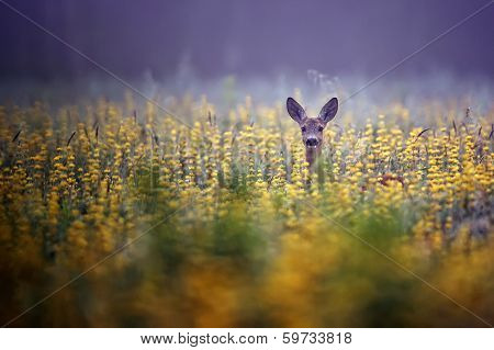 Roe-deer in the morning mist