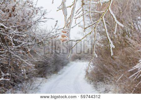 Frozen Tree Branches Overlooking Forest Path In Winter
