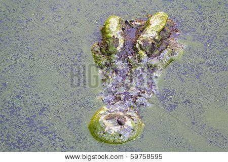 samut prakan crocodile farm & zoo thailand