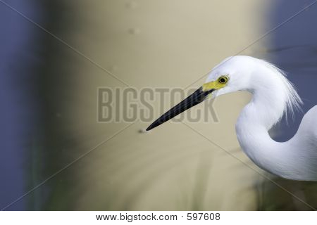 Egret On A Surreal Background