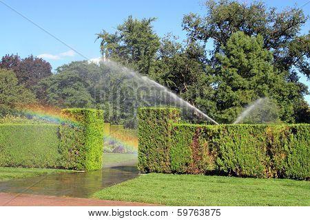 Watering in Botanical Garden