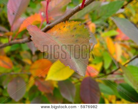 Herbst Leaf auf einem Baum
