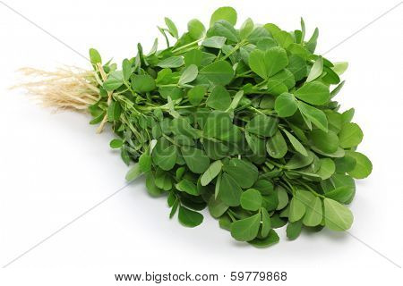 methi, fenugreek leaves