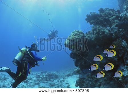 Butterfly Fish Diver