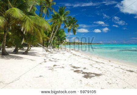 Caribbean Wild Beach