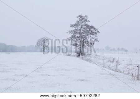 Dutch Farmland In Winter