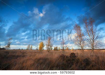 Sunset Sunlight Over Autumn Marsh