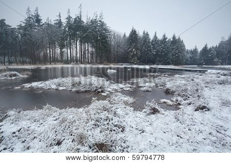 Winter Morning Over Swamp In Coniferous Forest