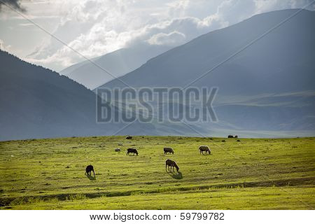Group of sheeps pasturing in mountains