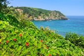 beautiful beach of Pechon Cantabria Spai  ,Europa