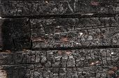 stock photo of slit  - Charred logs - JPG