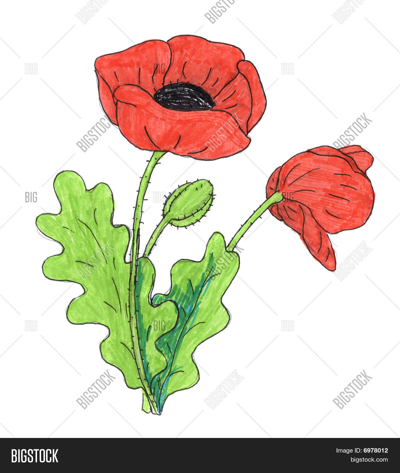 Poppy flower drawing stock photo stock images bigstock for Poppy drawing step by step