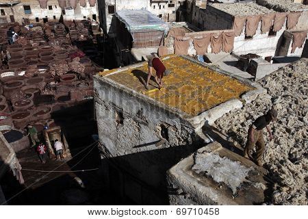 Tannery of Fez, Morocco