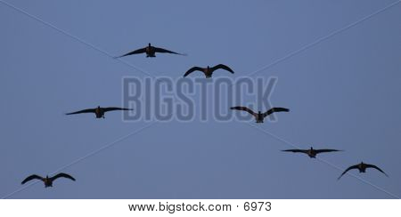 Line Of Geese poster