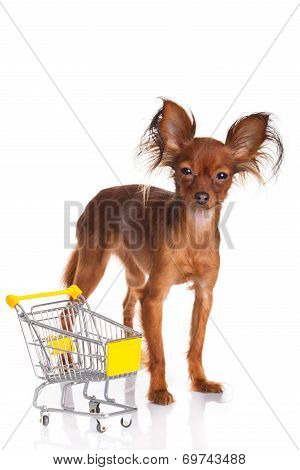 Toy Terrier With Shopping Cart Isolated On White. Funny Little Dog. Russian Toy Terrier On A White B