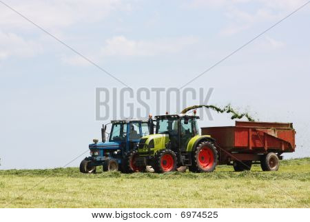 Chopping And Harvesting Silage
