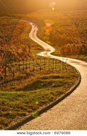 Road Trough The Autum Wineyard