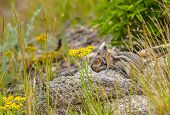 foto of chipmunks  - Chipmunk Mother carrying her little baby . ** Note: Shallow depth of field - JPG