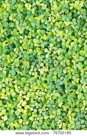 Green Weed Background.