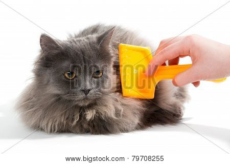 Women's Hand Brushed  Fluffy Cat