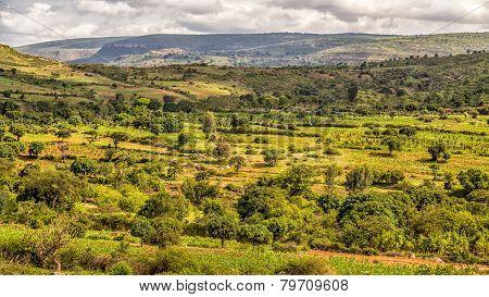 Beautiful Landscape Of Harar