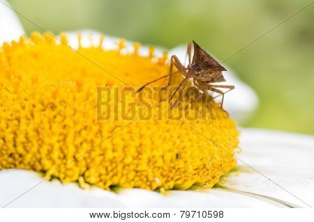 Insect Sucking Nectar Of A Flower