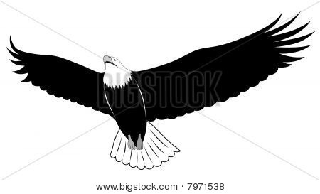 Eagle, Tattoo