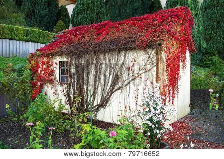 Overgrown garden shed