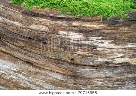Natural wood structure with moss