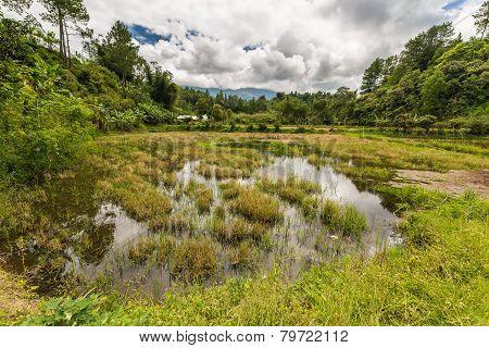 Toraja landscape