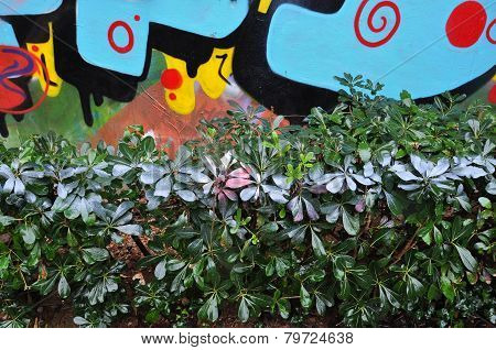 Hedge With Spray Painted Leaves