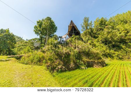 Toraja traditional culture and life