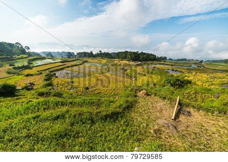 Sulawesi rice fields