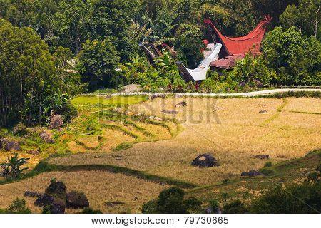 Idyllic traditional Toraja village