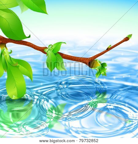 Spring Branch Water Ripple Wave Radial Background