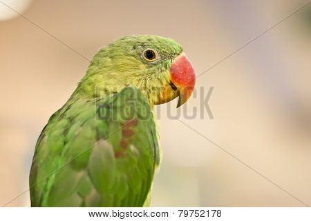 Close Up Of Parrot Bird.