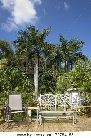 Tropical Trees And Chairs In Puerto Rico