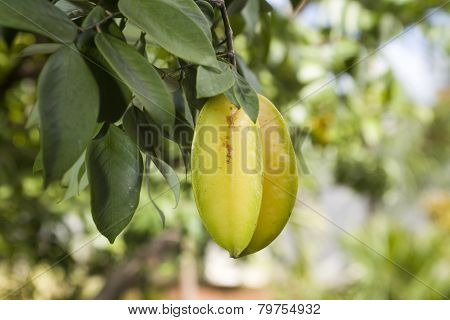 Carambola Also Known As Starfruit
