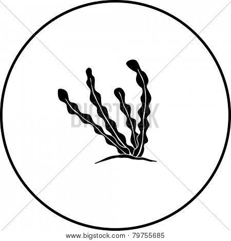 seaweed symbol