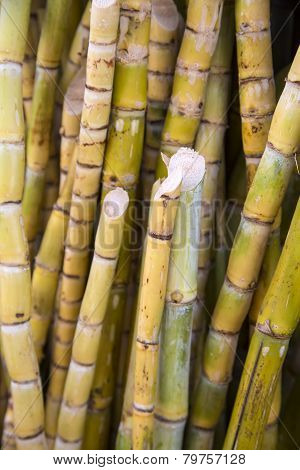 Bamboos On The Market