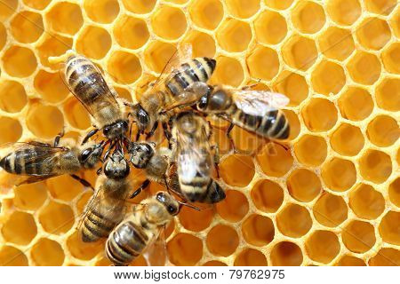 Some Honey Bees Are Working