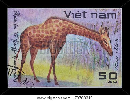 Post Stamp. Giraffa Camelopardalis