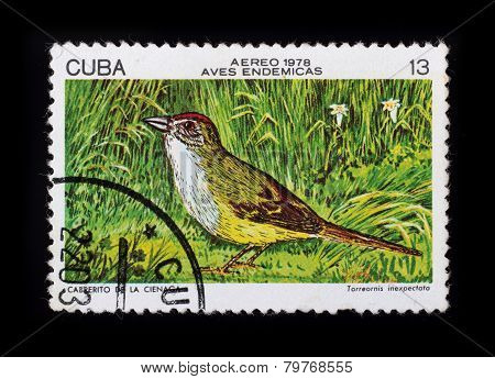 Post Stamp. Birds - Torreornis Inexpectata