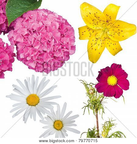 Hydrangea, Daisies, a Yellow Tiger Lily and a Magenta Anemone Coronaria Isolated
