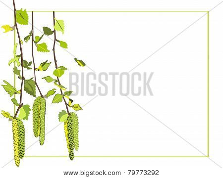 White Background With Vector Drawings Birch Twigs And Birch Earrings