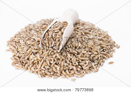 Spelt (isolated On White)