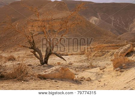 Dried Tree in Desert