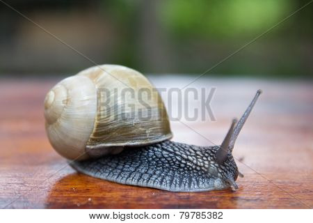 Snail Crawled Out