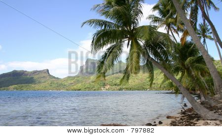 Tahiti Beach Scene with Palm Trees